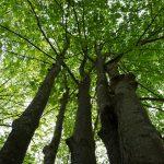tree care service in san antonio